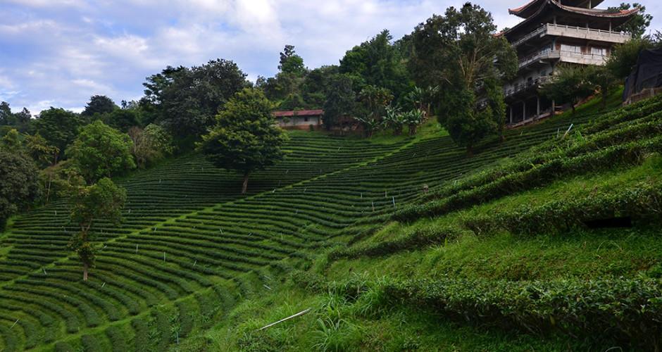 Plant_Thai_001