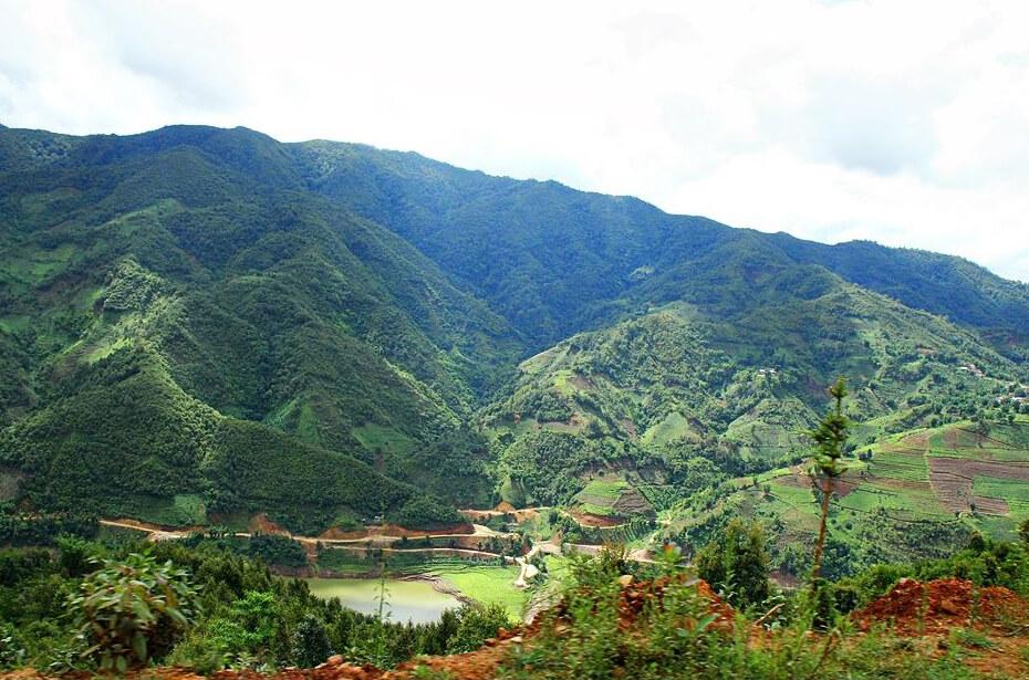 Чайные плантации Вави фото