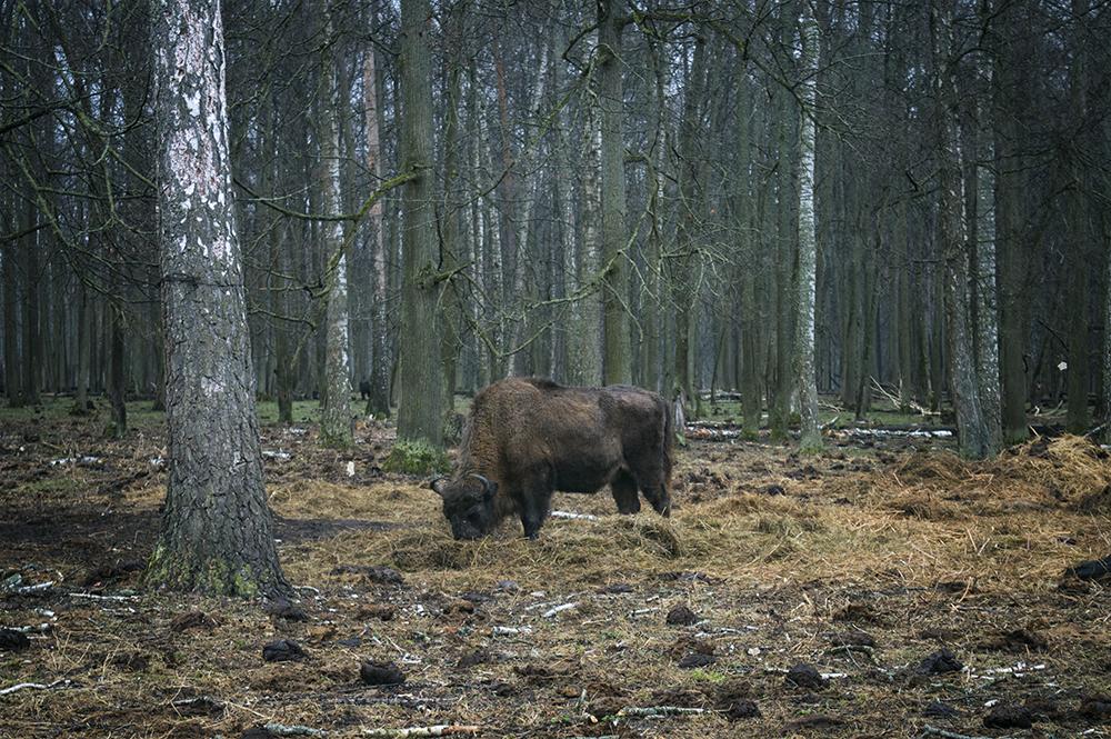 Приокско-террасный заповедник фото