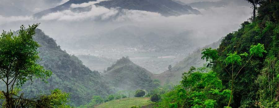 Страна «Зомия» или откуда во Вьетнаме чай?