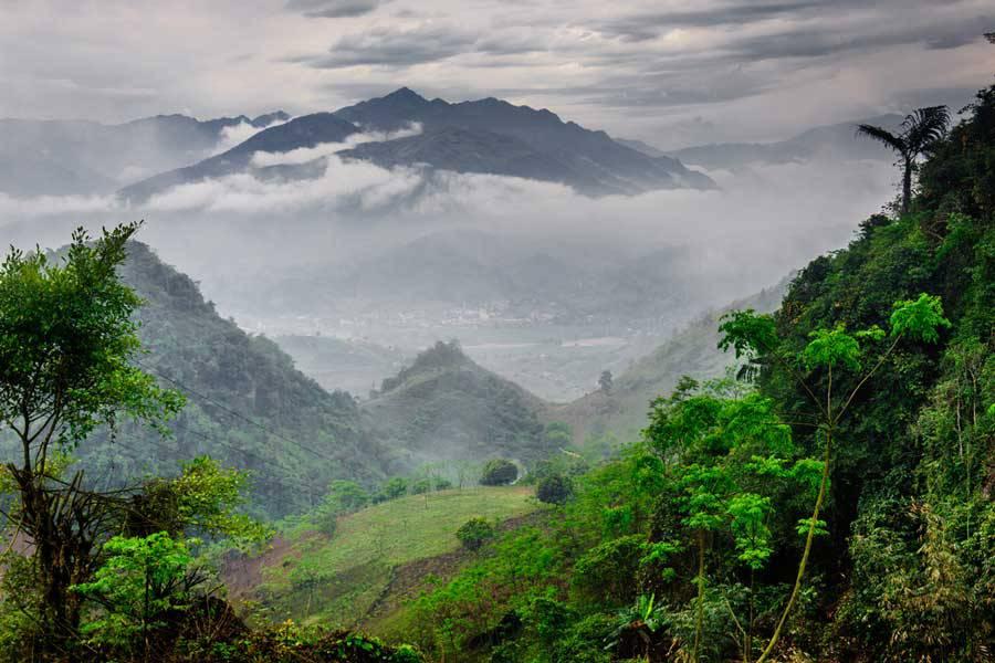 Вьетнамские чайные деревья фото