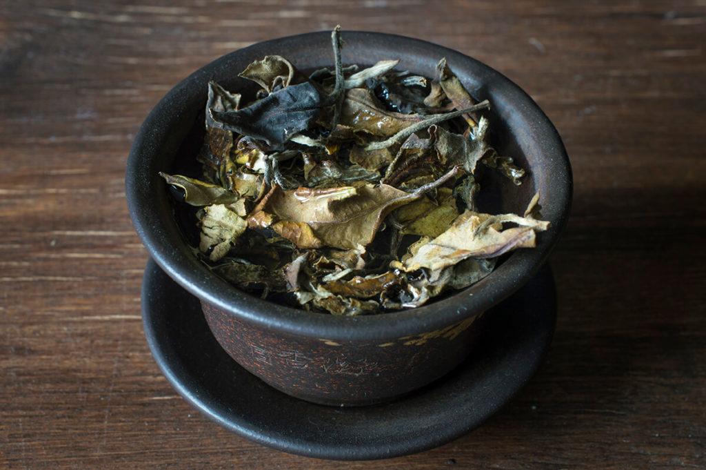 Белый чай с деревьев фото