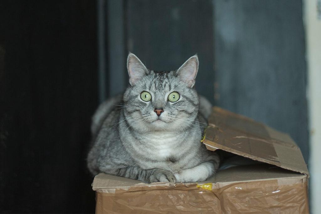 Чайный котик фото