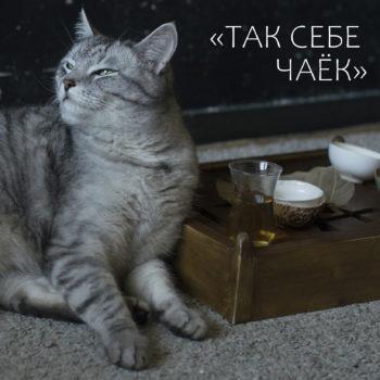 «Так себе чаек»… Как дать чаю второй шанс?
