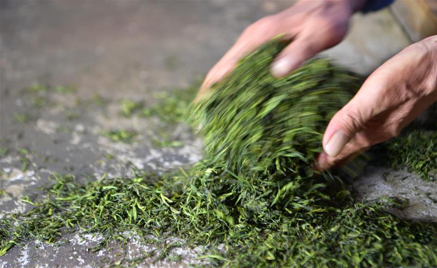 Обработка чая Эньши Юй Лу, Хубэй(Фотографии Синьхуа / Вэнь Линь)